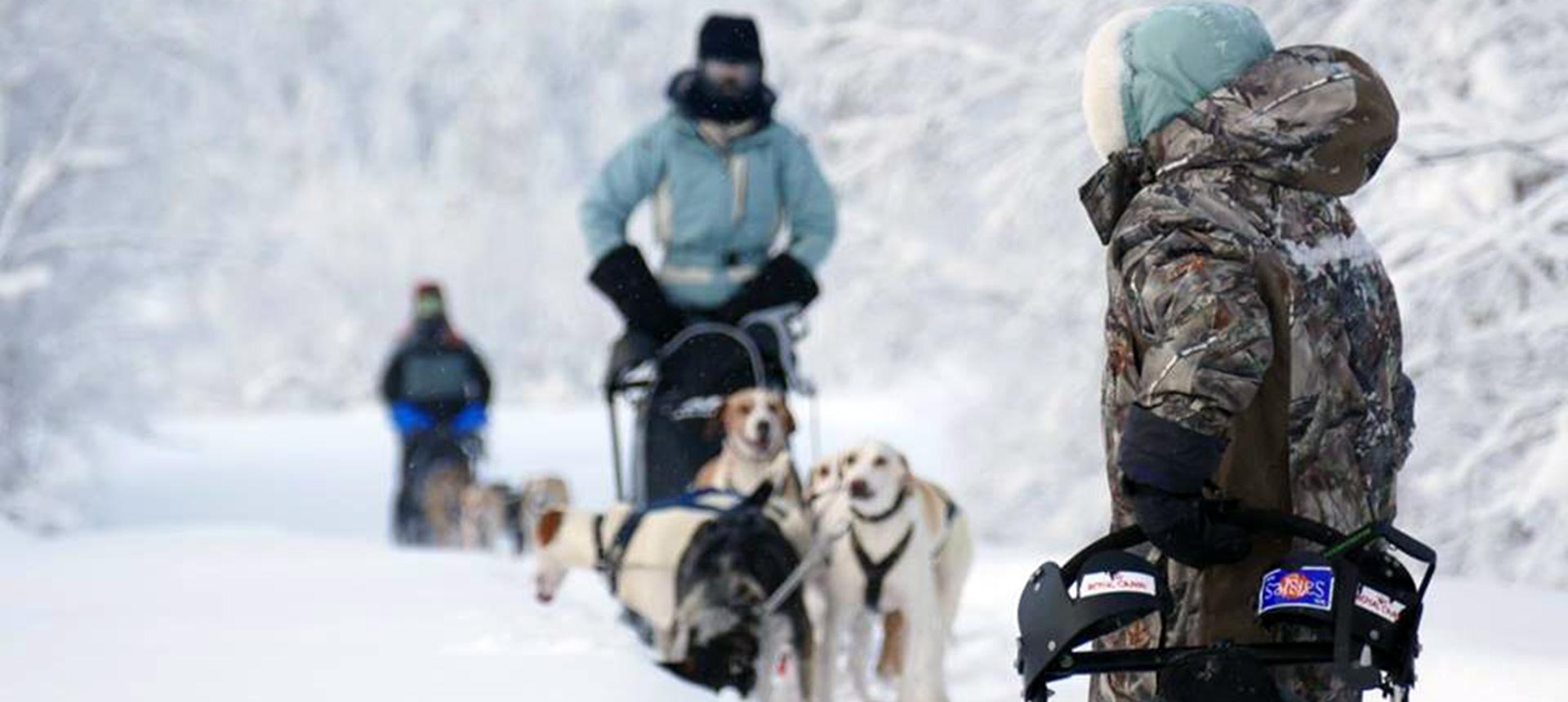 Le chien de traîneau est roi durant un séjour nature en Laponie !