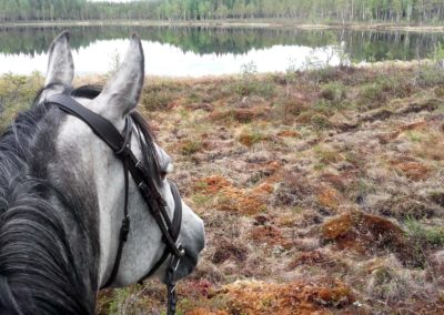 Umiko, notre cheval, devant rivière Örån, en Laponie suédoise