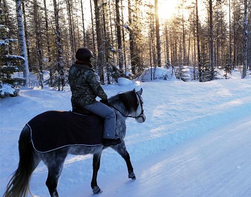 Lors d'une randonnée équestre en Laponie en hiver