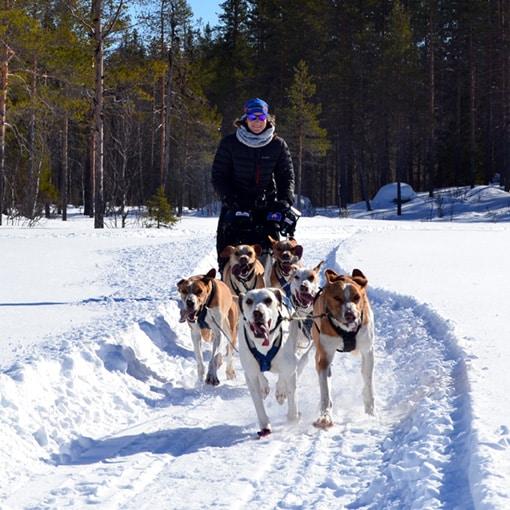 Aurélie Delattre, lancée à pleine vitesse lors d'un séjour chien de traîneau en Laponie