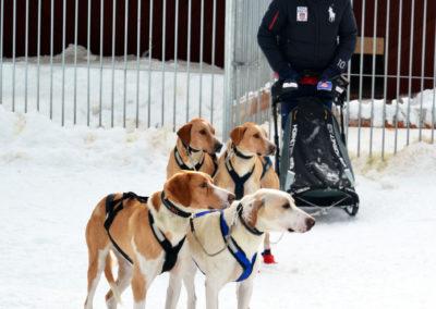 un stagiare prêt pour la séance de conduite de chien d'attelage de chien de traîneau en Laponie