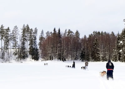 les attelages de chiens de traîneau filent dans la neige à travers les paysages lapons, en suède